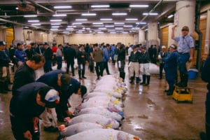 Tsukiji Fish Market – Tuna auction